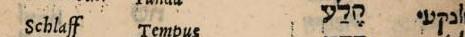 Zeile aus dem hebräischen Wörterbuch von Elias Levita: Schulter - Humerus - KaThePh (hebr.) - Schulter (in jiddischer Schrift)
