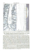 Seite 1174
