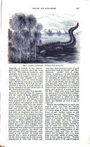 Seite 447