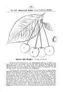 Seite 531